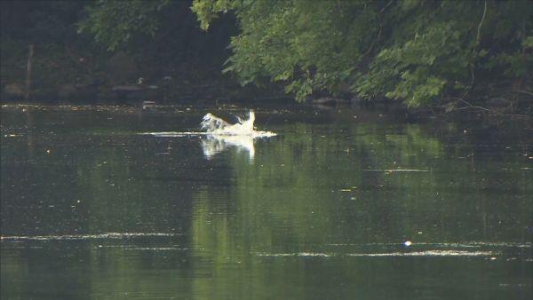 Police Possible alligator spotted in Elmwood Park
