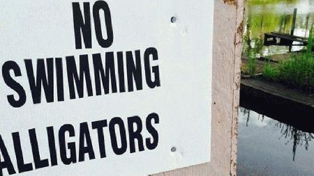 Alligator kills man during late-night swim story image