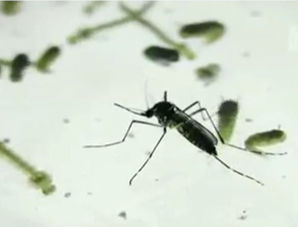 West Nile Virus UPDATE Health Authorities Drop Tips On How To Avoid Contracting Disease