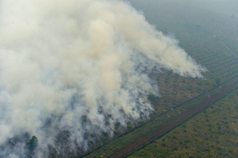 President Joko Widodo: We will solve the haze issue in 3 years