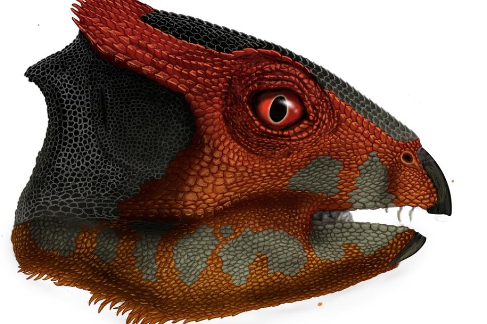 Hualianceratops wucaiwanensis