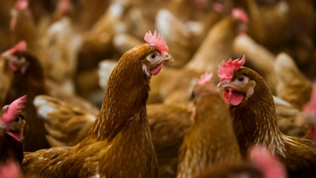 Brazil exported US$6.9 billion of poultry and $5.5 billion of beef worldwide last year according to industry groups